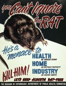 """You Can't Ignore the Rat!"" 1950, a poster commissioned by the Government of Alberta. Source: Provincial Archives of Alberta"