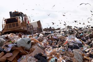 Fly and seagull control on landfill sites in North East of England