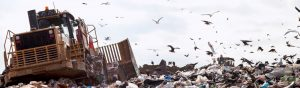 Landfill site in Tyne and Wear showing the seagull problems