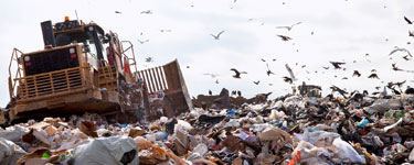 Seagull and fly problems on waste reception sites ad landfills